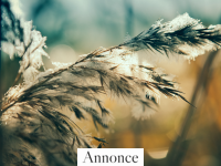 Boligtjek: Er din bolig klar til vinteren?