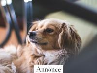 Skal du have hund i boligen? Her er et par gode råd